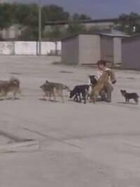 SOS!!!!!!Люди!!!! Приют для бездомных животных г.Никополя просит помощи!!!!