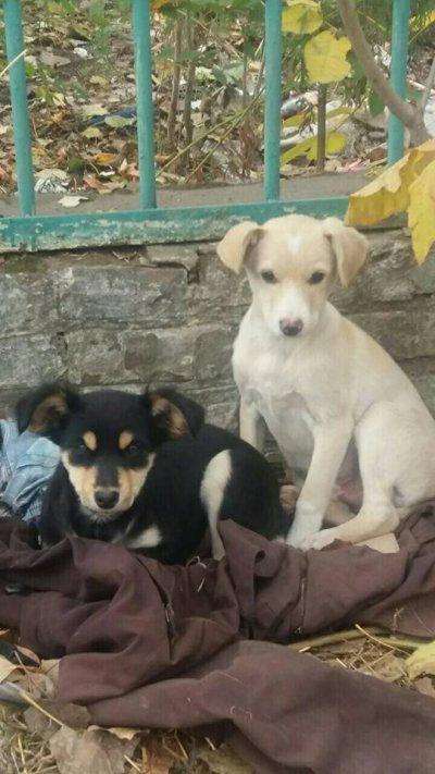 Чёрная полоса бывает не только у людей, но и у животных. Давайте найдём щенку дом!!!