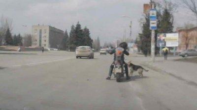 Я очень люблю собак. Но что делать в такой ситуации? (видео с авто регистратора)