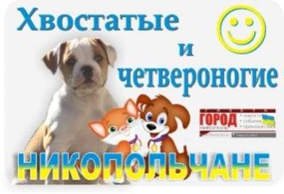 город Никополь : Прогулка по приюту для животных  (видео)