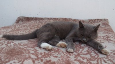 "Кот ""Маркиз"" не знает куда делся карасик из пруда (видо)"